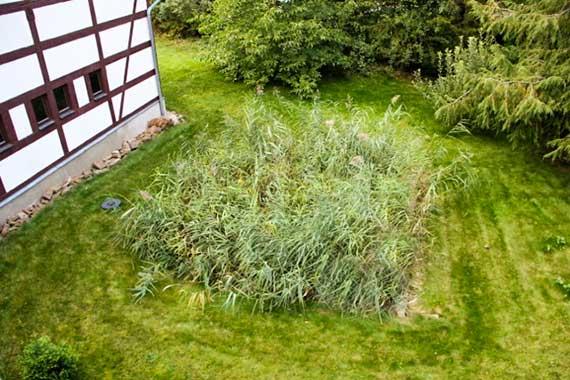 Pflanzenklaeranlage